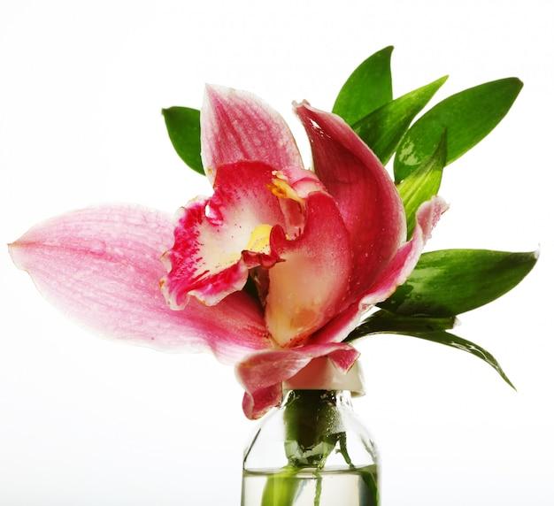 Orquídea rosa closeup
