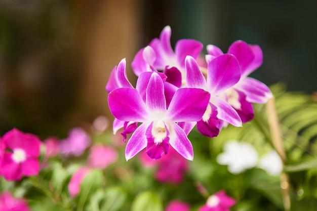 Orquídea rosa e folhas