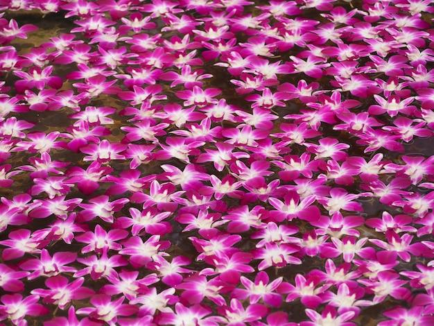 Orquídea rosa linda