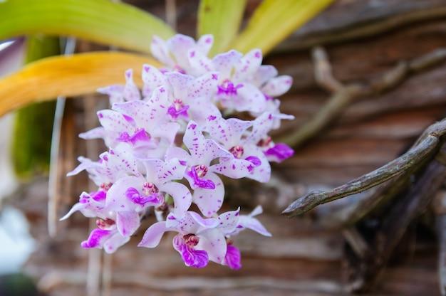 Orquídea roxa bonita