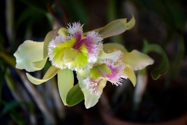 Orquídea verde sobre fundo marrom escuro