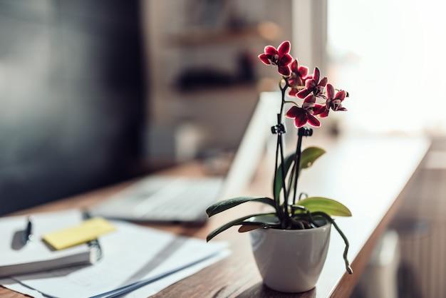 Orquídea vermelha pequena na mesa de escritório