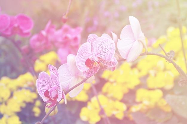 Orquídeas brancas e roxas.