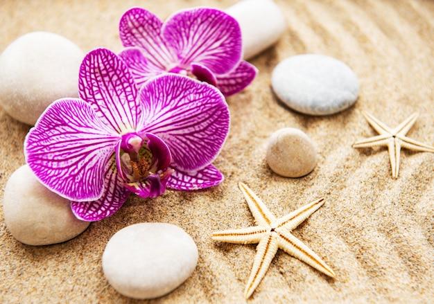 Orquídeas e pedras