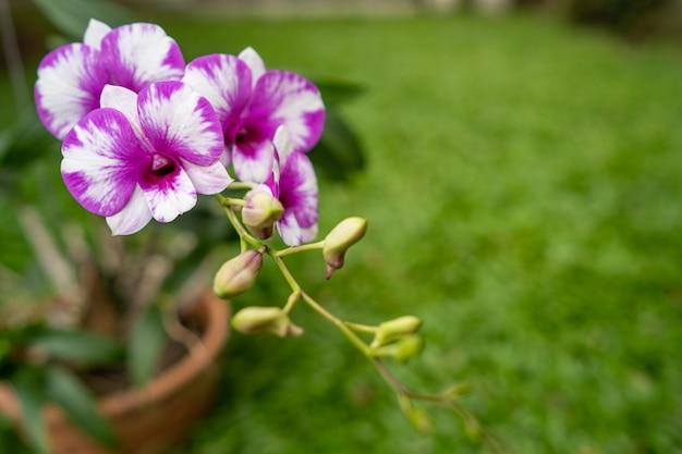 Orquídeas em flor