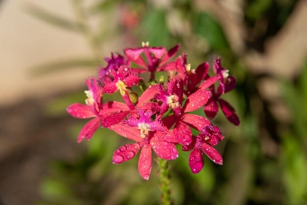 Orquídeas, lindas orquídeas encontradas em árvores em praças e parques, foco seletivo.