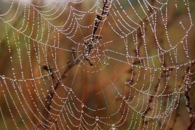 Orvalho da manhã em teias de aranha