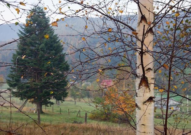 Orvalho da manhã em um galho de árvore e pastagem na montanha atrás