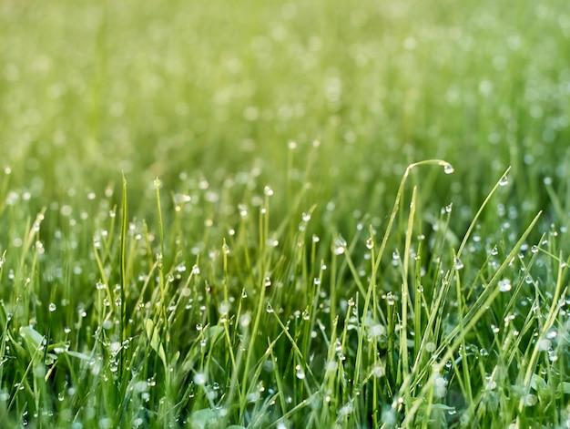 Orvalho da manhã na grama fresca