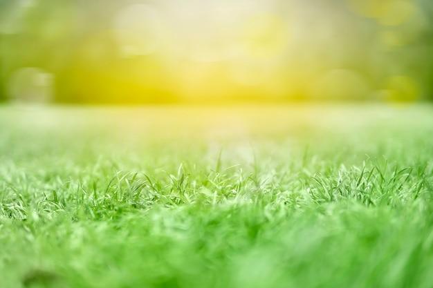 Orvalho da manhã na textura de grama verde tratada de um campo