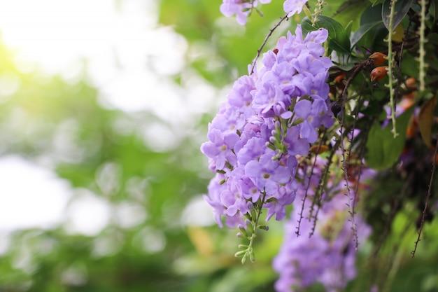 Orvalho dourado cair flores roxas com efeitos de luz no fundo da natureza