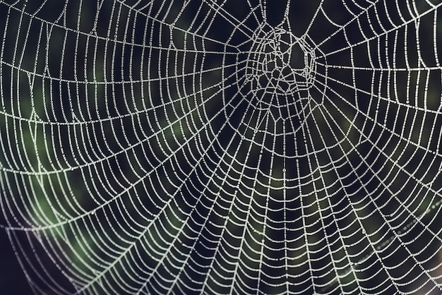 Orvalho em uma teia de aranha em um jardim