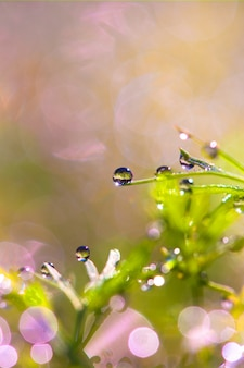 Orvalho na grama na natureza