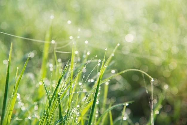 Orvalho na grama.