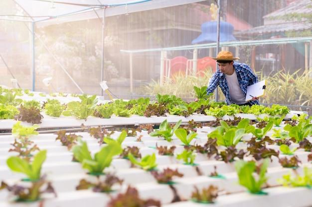 Os agricultores estão inspecionando vegetais orgânicos cultivados em fazendas.