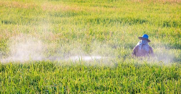 Os agricultores estão pulverizando as culturas em um campo verde.