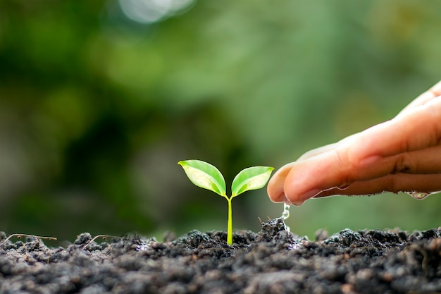 Os agricultores estão regando as pequenas plantas manualmente com o conceito do dia mundial do meio ambiente.
