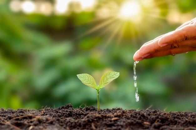 Os agricultores estão regando pequenas plantas manualmente com o conceito do dia mundial do meio ambiente.