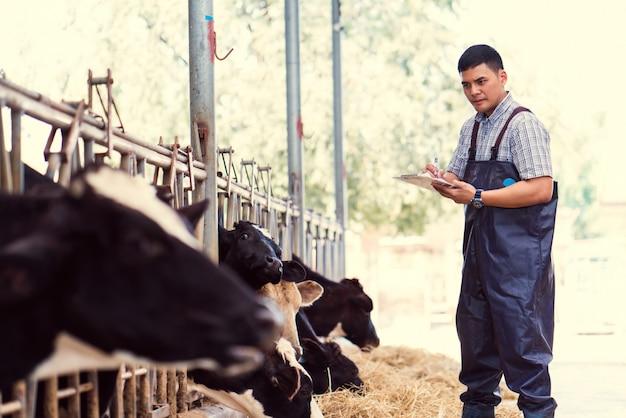 Os agricultores estão registrando detalhes de cada vaca na fazenda.