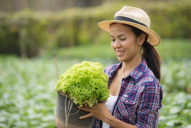 Os agricultores estão trabalhando na fazenda de alface verde carvalho