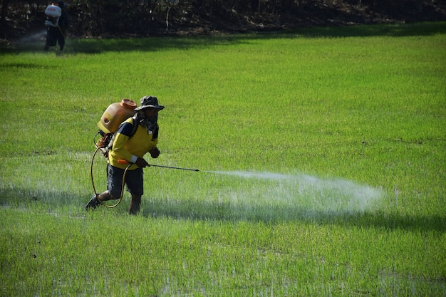 Os agricultores estavam fertilizando.infuso pulverizador de plantas daninhas