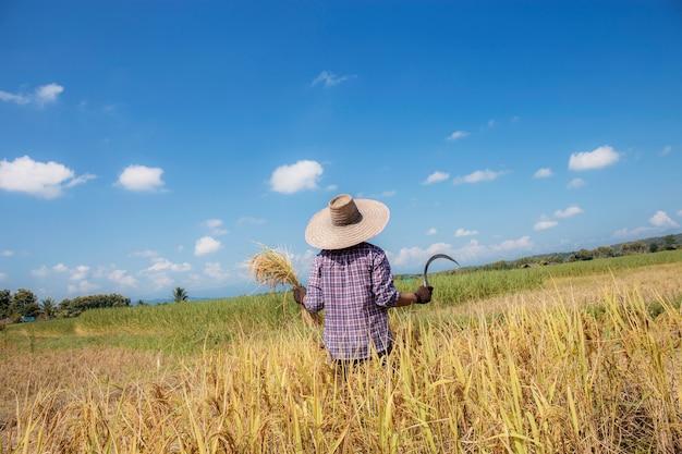 Os agricultores levantam e seguram grãos e foices no campo com o céu azul.