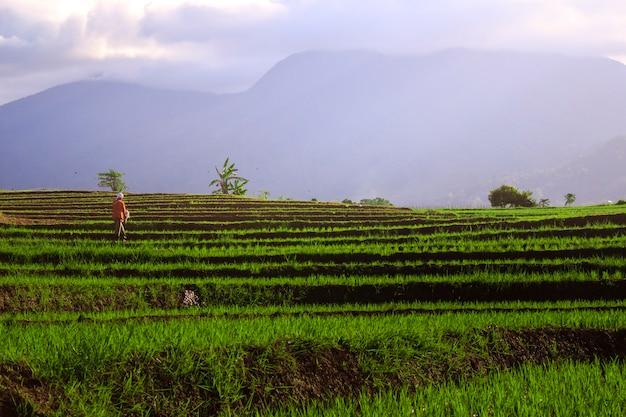 Os agricultores trabalham de manhã em campos de arroz e montanhas azuis