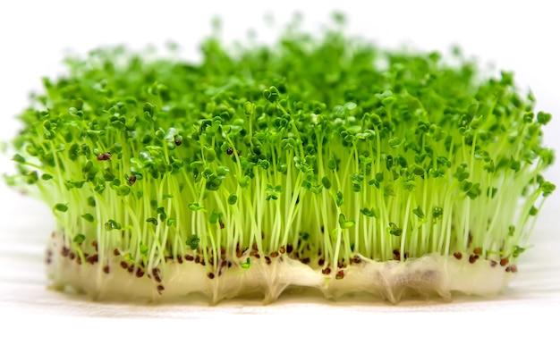 Os brotos de rúcula de microgreen isolam-se em um fundo branco.