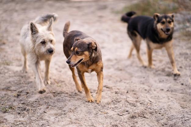 Os cães brincam na areia na praia perto da água.