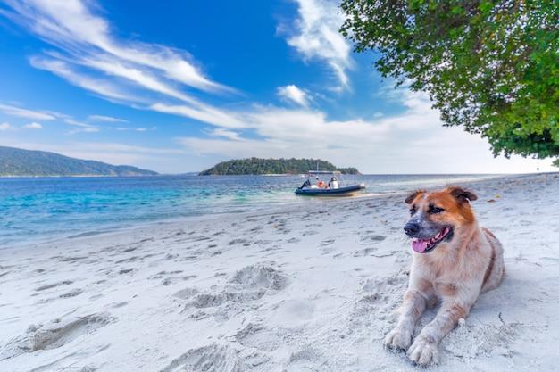 Os cães relaxam nas praias brancas bonitas da areia na ilha de tailândia.