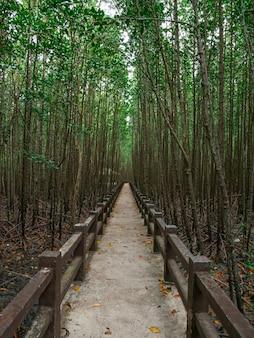 Os caminhos na floresta de mangue são silenciosos.