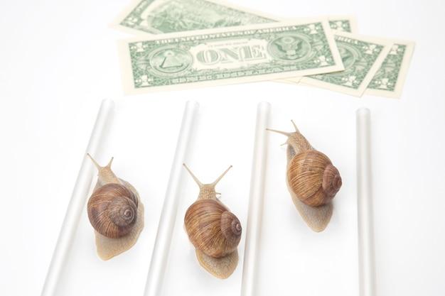 Os caracóis correm para a linha de chegada com dinheiro. avanço e perseverança no negócio.