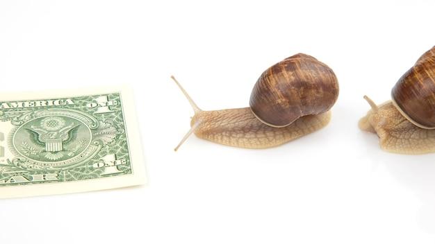 Os caracóis estão avançando em direção ao seu objetivo financeiro. luta lenta e persistente pelo sucesso.