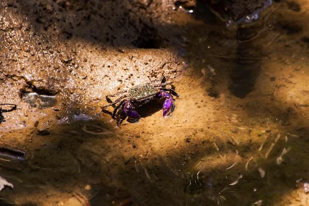 Os caranguejos vivem em manguezais. a condição dos ecossistemas de mangue.