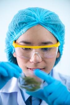 Os cientistas estão desenvolvendo pesquisas sobre algas. bioenergia, biocombustível, pesquisa de energia