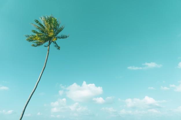Os coqueiros tropicais no céu do por do sol alargam-se e natureza do bokeh.