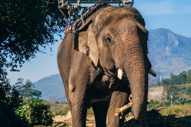 Os elefantes comem ao ar livre no parque