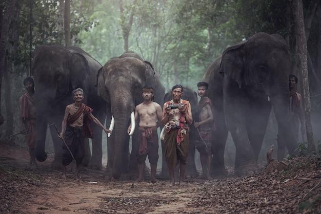 Os elefantes na floresta e o cornaca em chang village, província de surin, tailândia.