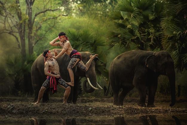Os elefantes na floresta e o mahout do encaixotamento com estilo de vida do elefante do mahout em chang village, província de surin tailândia.