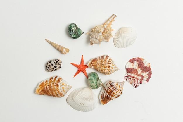 Os escudos coloridos do mar dispersaram aleatoriamente na parede branca. férias de verão