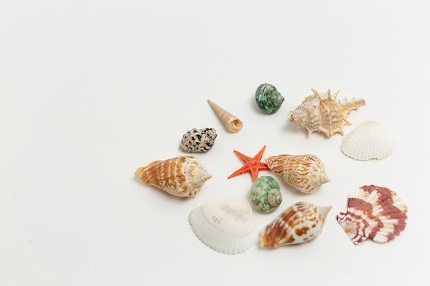 Os escudos coloridos do mar dispersaram aleatoriamente no fundo branco. férias de verão