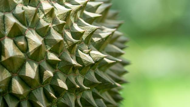 Os espinhos do close-up do durian bonitos vêem os detalhes dos espinhos.