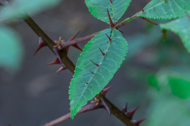 Os espinhos nas folhas