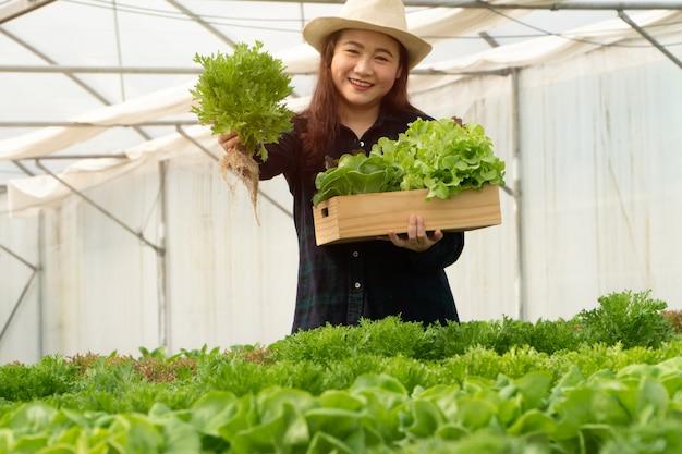 Os fazendeiros asiáticos da mulher colhem vegetais de salada frescos em explorações hidropônicas do sistema da planta na estufa para introduzir no mercado.