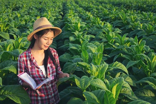 Os fazendeiros prendem o caderno verificam campos de tabaco modernos.