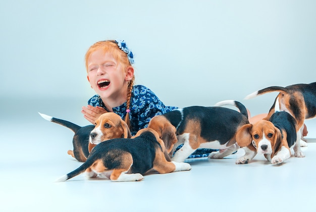 Os filhotes felizes de menina e beagle na parede cinza