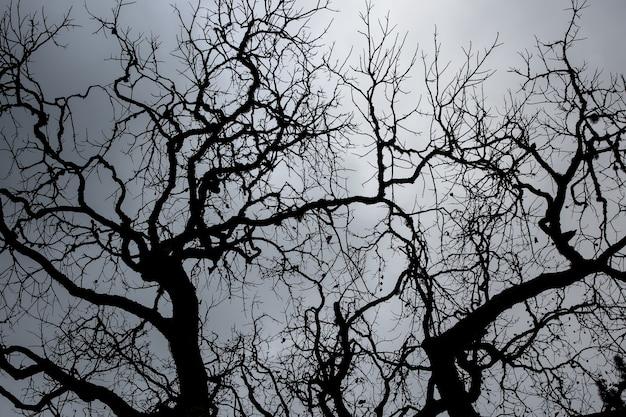 Os galhos da copa das árvores em frente à luz do sol.