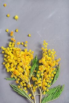 Os galhos da mimosa de florescência fecham-se acima no fundo concreto cinzento.