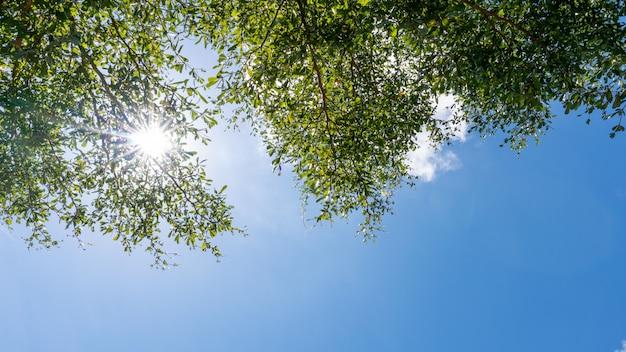 Os galhos de árvores moldam lindas folhas verdes contra o céu azul claro e a imagem de fundo de natureza de reflexo de luz