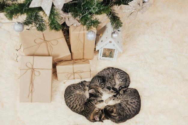 Os gatinhos dormem perto de caixas de presente.